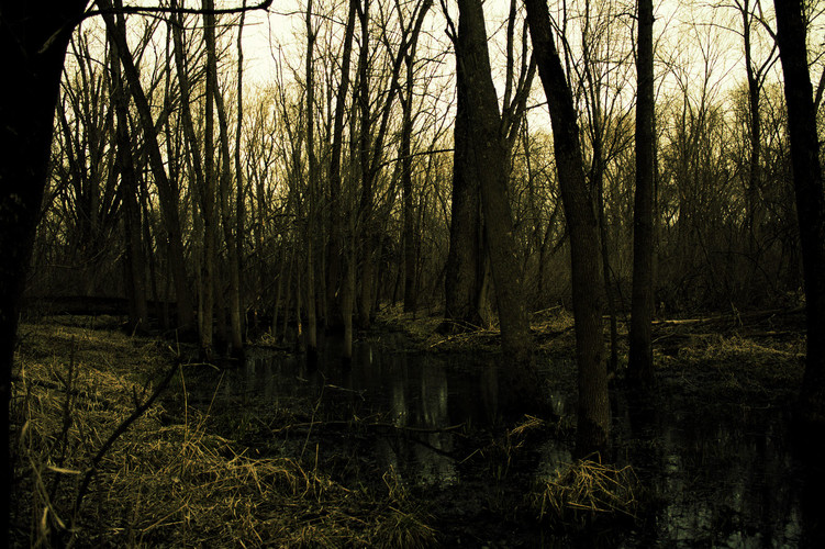 The same swamp as before with a yellow color theme